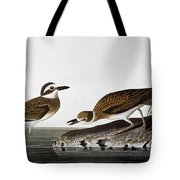Audubon: Plover, 1827-38 Tote Bag