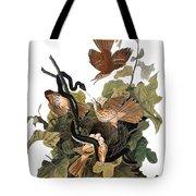 Audubon: Thrasher Tote Bag