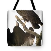 Audubon: Turkey Vulture Tote Bag