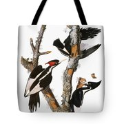Audubon: Woodpecker Tote Bag