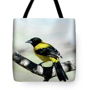 Audubon's Oriole Back Wings Tote Bag