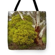 Australian Wattles Bush And Candlebark Gum Tree Tote Bag