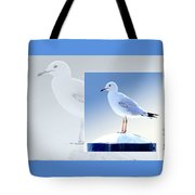 Australian Wildlife - Silver Gull Tote Bag