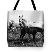 Austria: Horse Farm Tote Bag