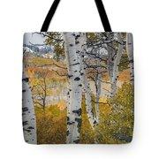 Autumn Aspens 8 Tote Bag