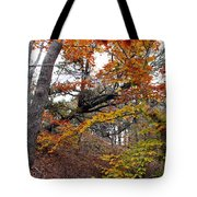 Autumn At Beech Forest Tote Bag
