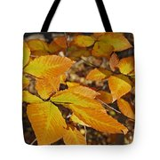 Autumn Beech  Tote Bag by Michael Peychich