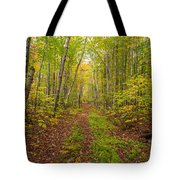 Autumn Birch Woods Tote Bag