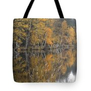 Autumn Birches On The Shore Of Lake Tote Bag