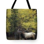 Autumn Bull Elk Bugling  Tote Bag