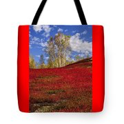 Autumn Birches And Barrens Tote Bag