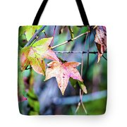 Autumn Color Changing Leaves On A Tree Branch Tote Bag