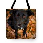 Autumn Dog Tote Bag by Adam Romanowicz