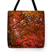 Autumn Foliage-1 Tote Bag