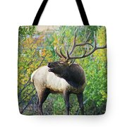 Autumn In Estes Park Tote Bag