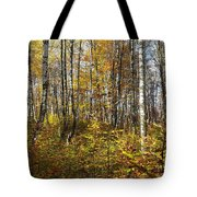 Autumn In The Birches Forest Tote Bag