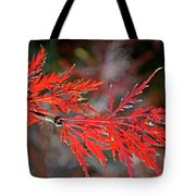 Autumn Japanese Maple Tote Bag