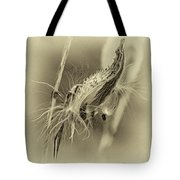 Autumn Milkweed 7 - Sepia Tote Bag