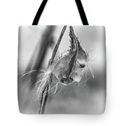 Autumn Milkweed 9 - Bw Tote Bag
