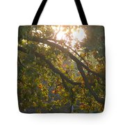 Autumn Morning Glow Tote Bag