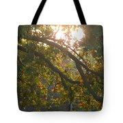 Autumn Morning Glow Tote Bag