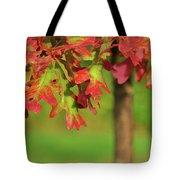 Autumn Oak Tree Tote Bag