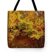Autumn Palette Tote Bag by Carol Cavalaris