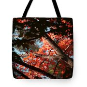 Autumn Red Trees 2015 02 Tote Bag