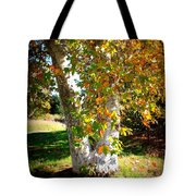 Autumn Sycamore Tree Tote Bag