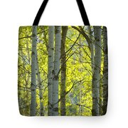 Autumn Through The Trees Tote Bag