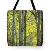 Autumn Through The Trees Tote Bag
