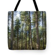 Autumn Tranquil Forest Tote Bag