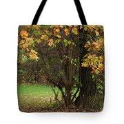Autumn Tree 2 Tote Bag