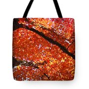 Autumn Tree Art Prints Orange Red Leaves Baslee Troutman Tote Bag