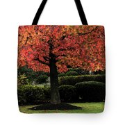 Autumn Tree At St Bernadette Tote Bag