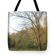 Autumn Tree At Sunset Light Tote Bag