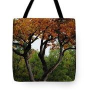 Autumn Tree II Tote Bag