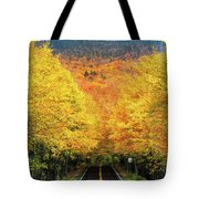Autumn Tree Tunnel Tote Bag