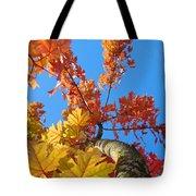 Autumn Trees Artwork Fall Leaves Blue Sky Baslee Troutman Tote Bag