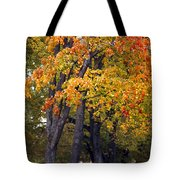 Autumn Trees In Park Tote Bag