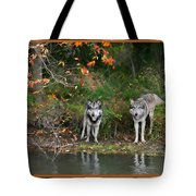 Autumn Wolf Study  Tote Bag