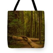 Avenue Of The Giants Tote Bag