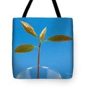 Avocado Seedling Tote Bag
