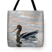 Avocet Sunset Tote Bag