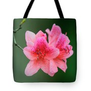 Azalea Blooms On A Green Background Tote Bag