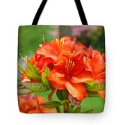 Azaleas Art Home Decor 14 Orange Azalea Flowers Art Prints Greeting Cards Tote Bag