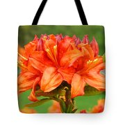 Azaleas Orange Red Azalea Flowers 11 Botanical Giclee Art Baslee Troutman Tote Bag