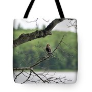 Kejimkujik National Park - Bird Tote Bag