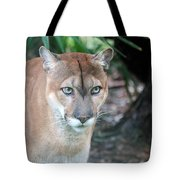 Babcock Wilderness Ranch - Oceola The Panther Gazing Tote Bag