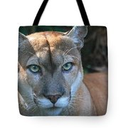 Babcock Wilderness Ranch - Oceola The Panther Pleasantly Peering Tote Bag